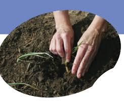 soil preparation for gardens