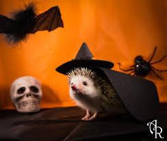 Hedgehog Halloween Costume Hedgehog Halloween Photographs Happy Hedge Ween