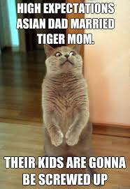 Tiger Mom Meme - high expectations asian dad cat meme cat planet cat planet