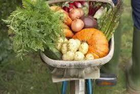 5 vegetable garden tips for an abundant harvest home guides sf