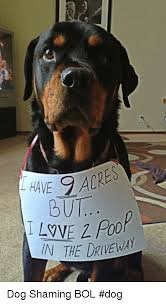 Dog Shaming Meme - but in the driveway dog shaming bol dog meme on me me