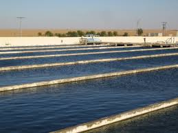 specific types of fish farms amisy fish pulse linkedin