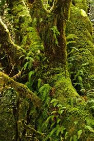 Deep Forest Green 595 Best Into The Deep Forest Images On Pinterest Woods Nature