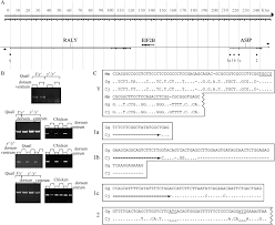 characterization of japanese quail yellow as a genomic deletion