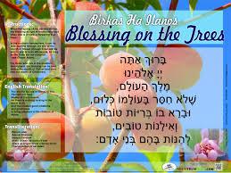 birkas ha u0027ilanos time free poster where can you make the bracha