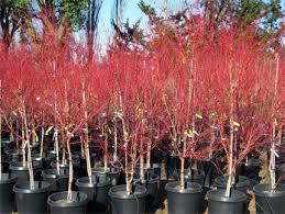 plants trees catalog tree farm nursery