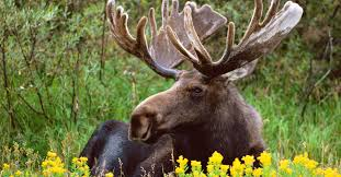 Wyoming wild animals images Top 5 north american animals you can still see in the wild jpg