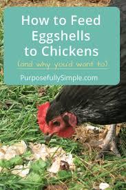 Backyard Chickens 101 by 993 Best Taf Homestead Livestock Images On Pinterest Raising
