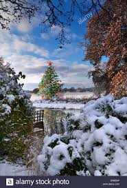christmas tree river concept winter view from bottom of snow