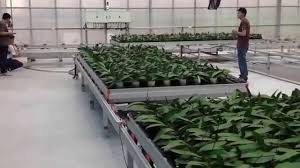 Metal Greenhouse Benches Greenhouse Rolling Bench Youtube