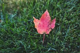 nutri lawn blog burlington
