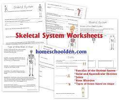 skeletal system worksheet free worksheets library download and