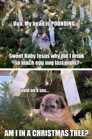 pug in a tree a atheist