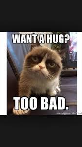 21 Of The Best Grumpy - 21 best grumpy cat images on pinterest grumpy cat cat memes and