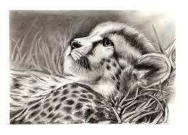 jungle sketches hope leopards 1996x1436 wallpaper high quality