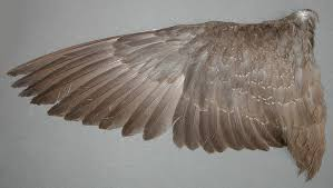 Bird Wing - my saves wing reference tag image and