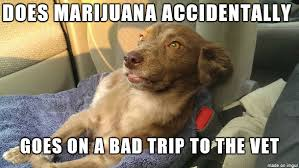 High Dog Meme - new meme i just made based on a dog that actually got high as fuck
