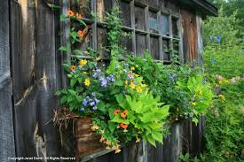 davis window and door ontario garden writer janet davis explores colour