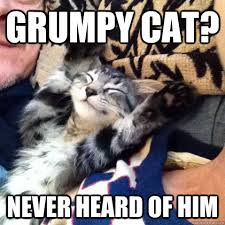 Happy Cat Meme - grumpy cat never heard of him happy cat quickmeme