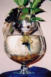 Betta In Vase Do You Take Your Pet To Work This Green Life