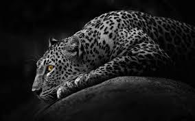 white jaguar car wallpaper hd jaguar wallpapers 4usky com