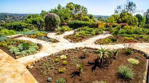southern california native plants landscaping drought tolerant landscaping xeriscapes water wise landscapes