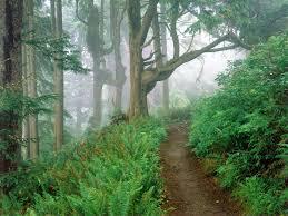 beautiful forest scenes hd wallpapers free download mp3 u0026 lyrics