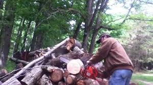 husqvarna 455 rancher cutting hardwood youtube