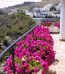 blumen fã r balkon 36 besten balcon ideas bilder auf beautiful gestalten