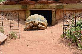good times rollin a tortoise fossils and wind caves