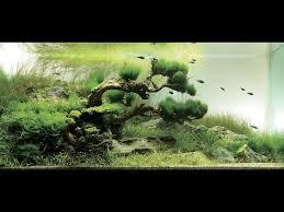 Takashi Amano Aquascaping Techniques 91 Best Nature Aquarium Takashi Amano Images On Pinterest