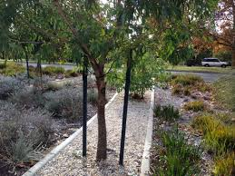 tree stakes image galleries flexipole bollards tree stakes composite fencing