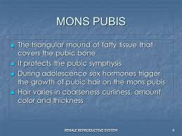mons pubis hair female reproductive system ppt video online download