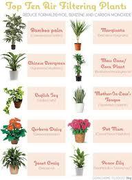 good low light plants good indoor plants low light 25 unique indoor plants low light ideas