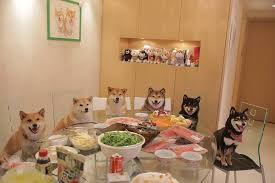 dogs at dinner table wow such dinner much food very tasty dogs know your meme