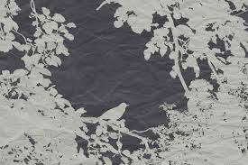 White Decorative Branches Free Images Tree Nature Branch Snow Bird Black And White