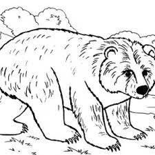 85 coloring brown bear big brown bear coloring