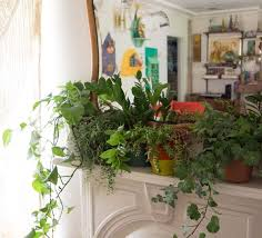 How To Arrange Indoor Plants by Moon To Moon I Have This Thing With House Plants Little Pots