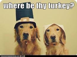 Funny Thanksgiving Meme - where be thy turkey i has a hotdog dog pictures funny