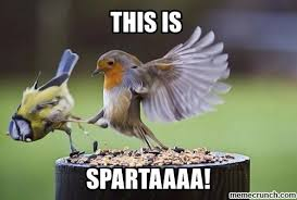 This Is Sparta Meme - sparta meme by hzh memedroid