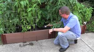 how to start a vegetable garden in your backyard design small