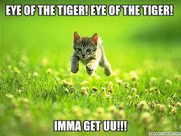 Eye Of The Tiger Meme - of the tiger eye of the tiger