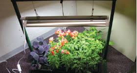 growing plants indoors with artificial light growing plants indoors using artificial light topeka shawnee