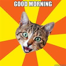 Good Morning Cat Meme - good morning bad advice cat quickmeme