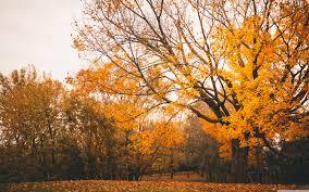 autumn scenery 4k hd desktop wallpaper for 4k ultra hd tv