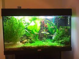 inspiring fish tank idea gallery design ideas 6755