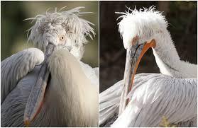15 birds snazzier hairdos mnn mother nature network