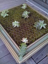 diy vertical succulent garden u2013 adorable home