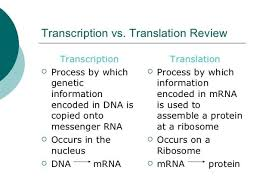 what are the major differences between transcription and
