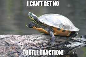 Turtle Memes - turtle traction imgflip